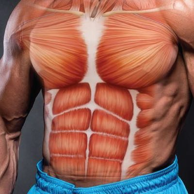 The 10 Basic Commandments of Bulding Muscle (Part 1)